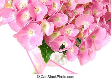 Lacecap Hydrangea (macrophylla  normalis) flower in a vase.