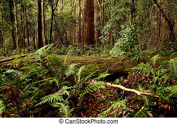 Lush - Rainforest in Queensland Australia