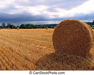 Harvested wheat - A harvested wheat field