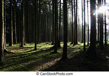 Sunlight Forest - The foto has been made in a forest near...