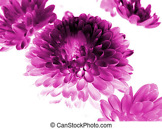 Flower background - Abstract flowers background