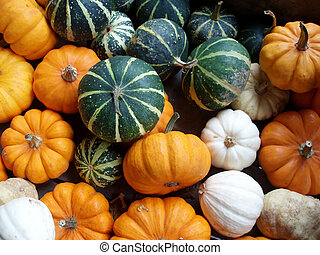 pumpkins - Background of green, yellow and white pumpkins