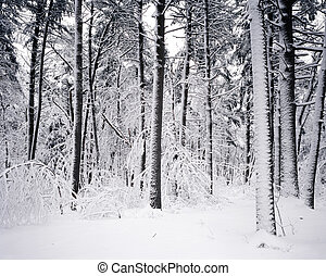 Heavy Fresh Snow - Breakheart Reservation with heavy...