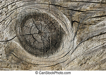 Wood Knot - Seasoned pine wood knot