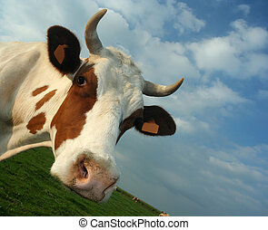 cow - a cow\\\'s head. NOTE TO REVIEWER: I removed the...