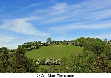 Summer Meadows - Summer meadows in rural countryside, with...