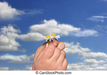 Little Daisies in Little Hands - Fingers of a child holding...