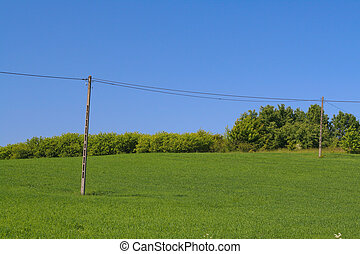telephone poles on a