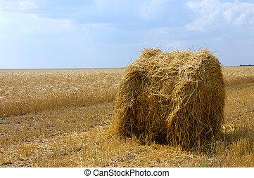 Wheat field - Hayrick on summer wheat field harvest time...