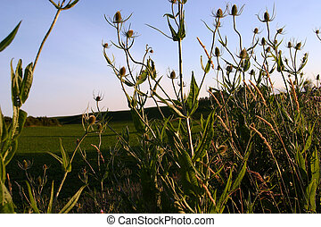 In the Weeds - Weeds growing by the side of a rural road in...