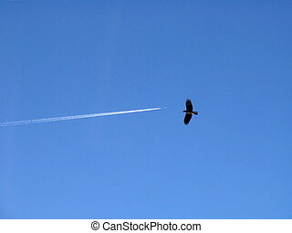 Dogfight - Crow and plane in sky