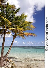 Caribbean Beach - Palms at a beautiful caribbean beach