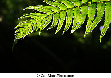 Fern in shadows. - A fern frond partly obscured by shadows.