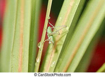 Grasshopper - Photo of a Grasshopper
