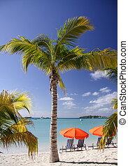 Caribbean Dream - Beautiful caribbean beach