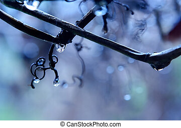 Rain in a vineyard - Freakish patterns from drops and...