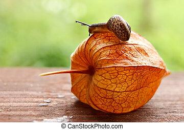 Strolling snail speed - Strolling snail in a garden after...