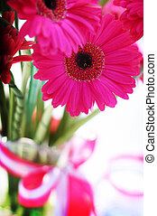 rosa, Blomstrar