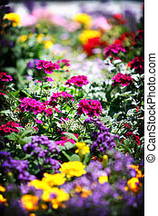 Flower Bed - Flower bed full of flowers