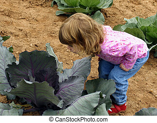 Cabbage patch child - Little girl peering into cabbage in a...