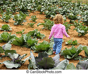 child in garden - Little girl walking through a cabbage...