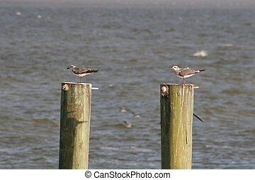 Two Birds - Two seagulls on two pilings