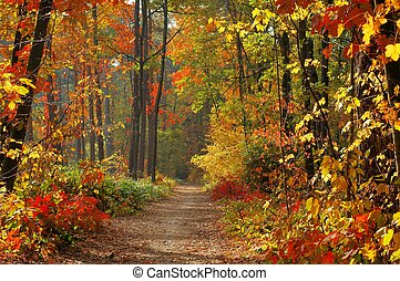 Colors of Fall - Fall in forest
