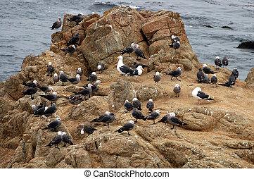 Seagull Nursery - Raising baby seagulls is a tuff job
