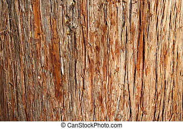 Cedar Bark - closeup of texture of red cedar bark
