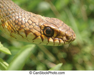 pasto o césped, serpiente