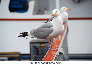 Seagulls on a boat - Two seagulls sitting on a fishing boat...