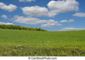 summer landscape #2