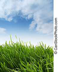 Grassy Hill - Long grass against sky