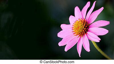 flor, 4