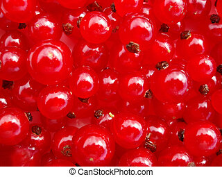 currants - Red currants as a background