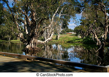 Wetlands 4 - Wetlands conservation, Queensland Australia
