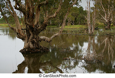 Wetlands 2 - Wetlands conservation, Queensland, Australia