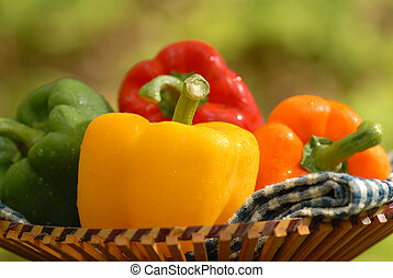 4 Peppers - peppers in a basket outside
