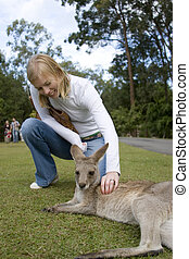 Woman petting kangaroo at Australia Zoo - A woman pets a...
