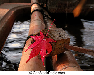 Autumn Japanese still life - Close-up of a wet maple leaf on...