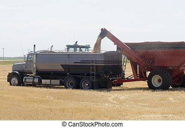 Abundance - Unloading wheat into a waiting truck