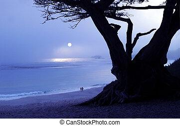 Foggy Sunset - Carmel, Calif