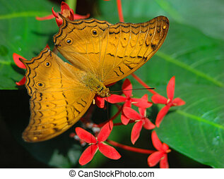 Julia Butterfly and flowers - Julia Butterfly on leaf and...