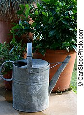 Watering Can - old metal watering can next to pot plants