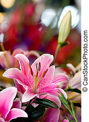 Pink lily - Flower stand at Pike Place market, Seattle