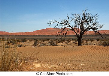 Namib landscape - Image was captured out of a vlei (dead...