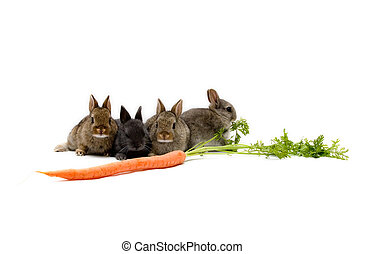 Bunnies and a Carrot - Four Netherland dwarf bunnies and a...