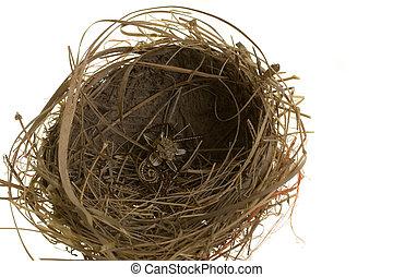 afortunado, cuervo, nido