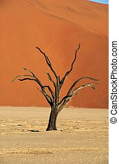 Deadvlei tree - The famous dead trees of deadvlei in...