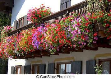 Flowers on the balcony - Detail of bavarian facade with...